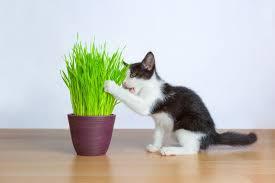 Животные, растения